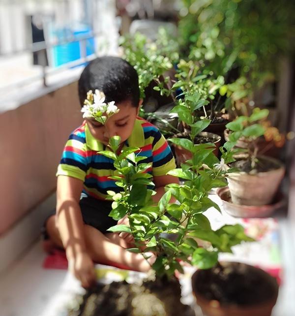 TREE PLANTATION 2019